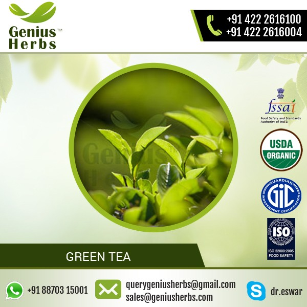GMP/ISO Certified Weight Loss Organic Green Tea