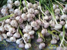 best price natural garlic for sale