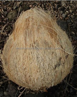 coconut exporters from south india