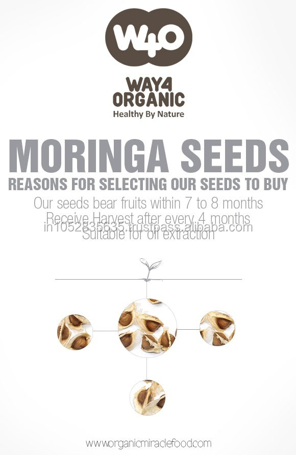 Fine Quality Moringa PKM1 Seeds For Sale
