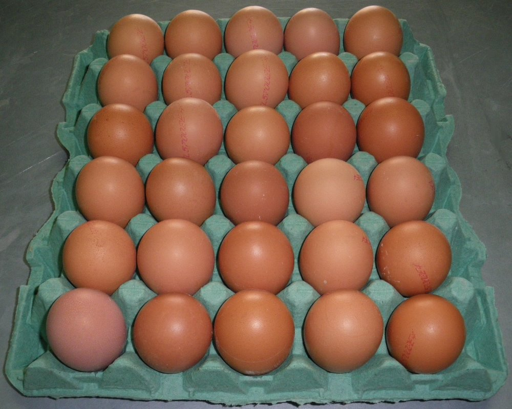 Fertile Hatching Chicken Egg/Fresh Chicken Table Eggs Top Quality
