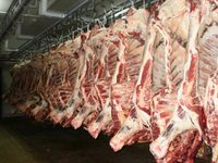 HALAL FROZEN BONELESS BEEF/BUFFALO MEAT FOR EXPORT !!! Gold Supplier !!!