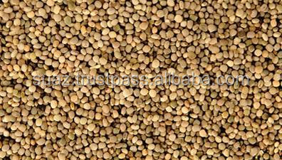 Bulk guar Seeds , Cheap Guar Seeds , Guar Bean seeds , Guar Gum seeds , Guar Seeds Price