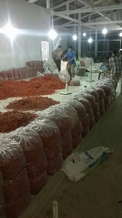 Frozen Red Chilli From Viet Nam