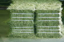 supply high quality Animal feed alfalfa / alfalfa hay for sale