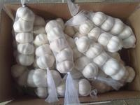 2016 crop fresh pure white garlic