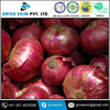 Indian Fresh Cheap Red Onion