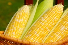 High Quality Non-GMO Yellow Corn for Human Consumption