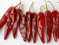 Indian Dry Chilli/ Guntur S 3 , 4 Andhra Sannam dry red Chilli