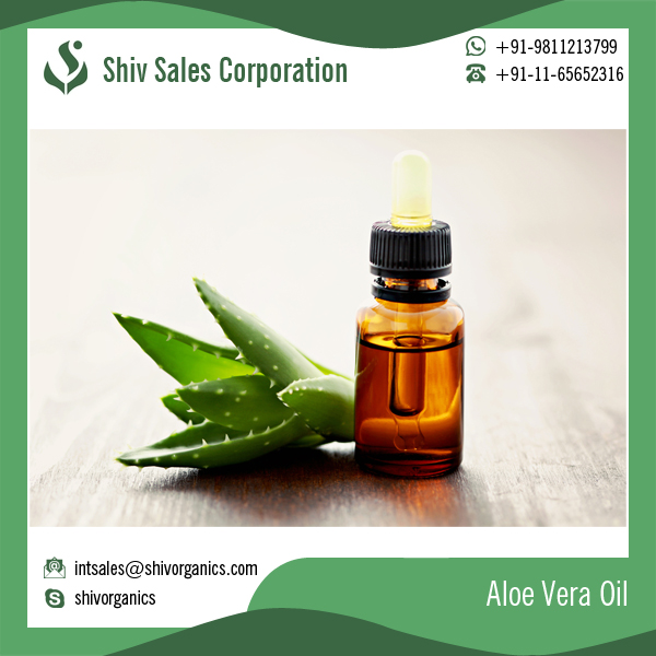Best Quality Vitamin Rich Wholesale Aloe Vera Oil for Facial Use
