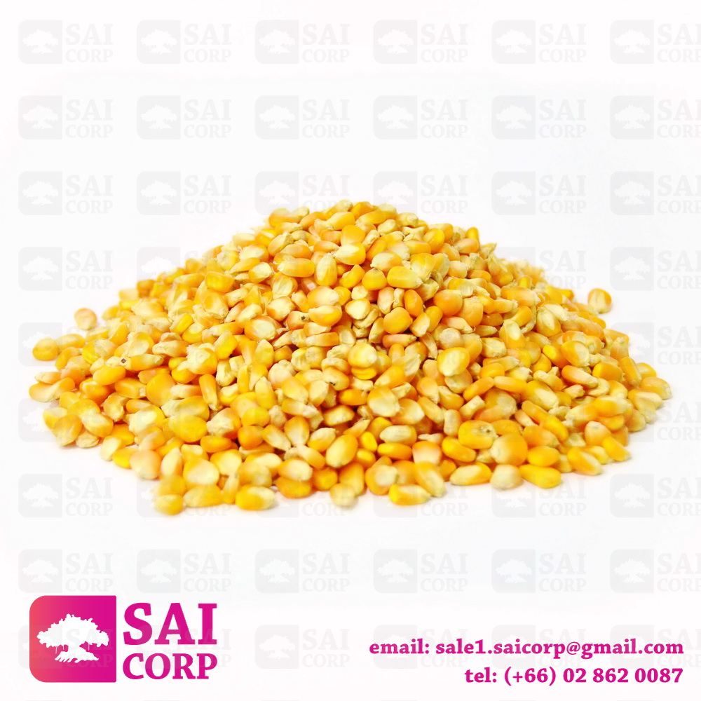 High Quality Dried Yellow Corn from Thailand