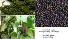 Heavy black pepper and light black pepper from madagascar, payment 100% letter of credit payable at sight