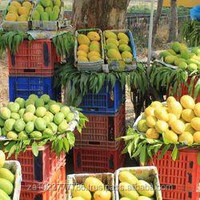 Fresh Mango new Fruits high quality Hot Sales