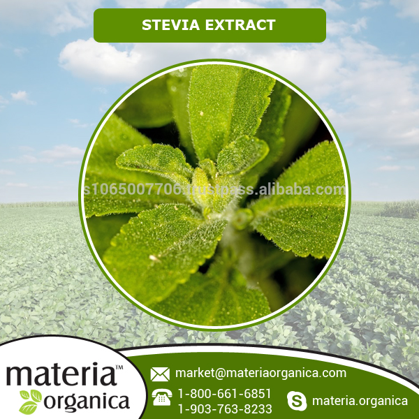 Hot Sale Organic Stevia Extract with Best Self Life