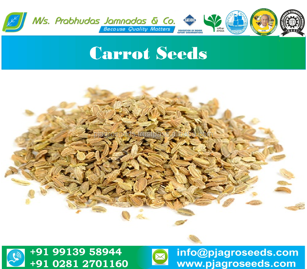 Carrot Seeds Price