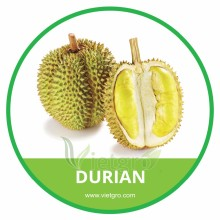HIGH QUALITY TROPICAL FRESH DURIAN