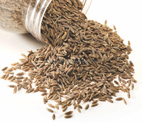 Top Quality Cumin seeds Spices
