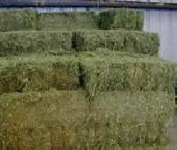 ALFALFA HAY - Low Grade - Double Compressed Big Bales - 14-16 % Protein - for Sale