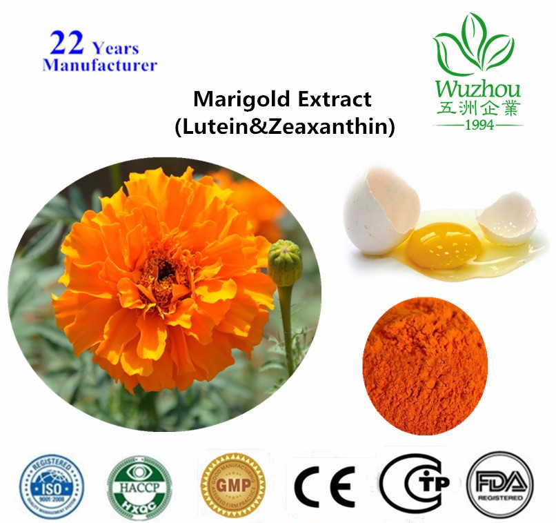 GMP factory supply 100% natural marigold extract,marigold flower extract,lutein for Improving Eyesight