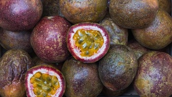 Fresh Passion Fruit with Best Price and Good Quality