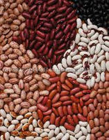 White Bean and White Kidney Beans !!!