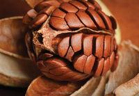 Sky Fruit/Xiang Tian Guo /Mahogany Seed