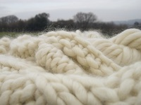 Certificated Greasy Wool For Sale