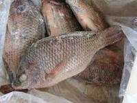 High Quality Seafood Red & Black Frozen Tilapia