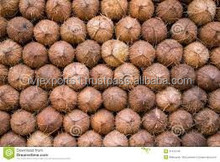 Fresh light brown coconuts from india