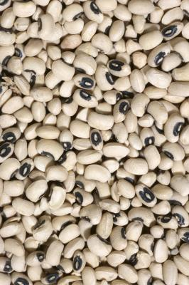 2017 new crop white cowpea/black eye bean (vigna beans)