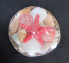 Seashells in coco midrib with Red Philippine Starfish