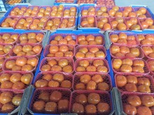 fresh Egyptian Persimmon a