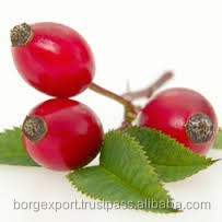 Rosehip Carrier Oil (OEM / ODM ) From India