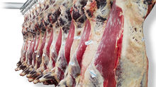 Halal beef meat for sale