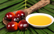 Wholesale Palm Oil from Thailand