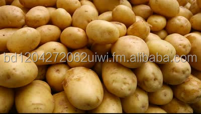 Fresh Potato Good Quality Best Price