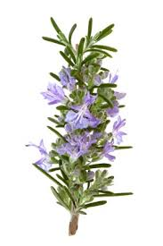 Pure and Natural Rosemary Essential Oil with high quality