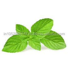 Mint Tablets Exporter