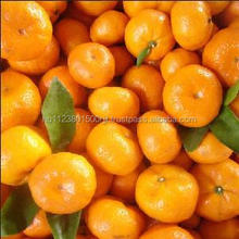 Juicy sweet delicious fresh baby mandarin citrus orange