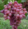 fresh grapes(flame, thompson , crimson ,superior)