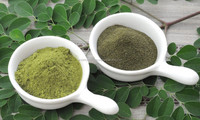 MORINGA LEAVES EXTRACT POWDER FROM INDIA
