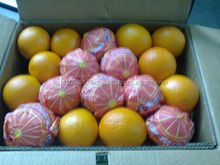 High quality Egyptian Navel Orange