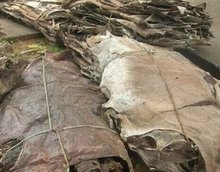 WET SALTED COW/DONKEY HIDES/SKIN, COW HEADS