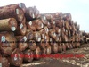 WENGE Logs and Sawn wood Lumber skype:premium.trading.co.ltd