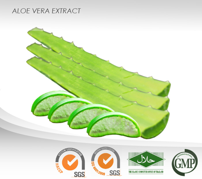 Aloe Vera Powder Extract : 50% Polysaccharides : Food supplement ingredient
