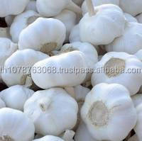 Fresh garlic/Normal White Garlic/Pure White Garlic