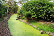 Water Conditioner to remove Algae from Garden Ponds