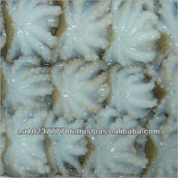 Octopus Seafood Fish available Fresh /Frozen Grade A Hot Sales Blast Frozen and Block Frozen FOR SALE