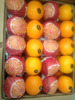 Hot selling fresh orange valencia with great price