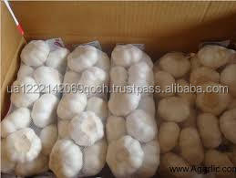 High Quality Fresh Normal White Galic Purple Garlic Red Garlic